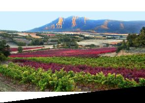 Navarra Wine Region