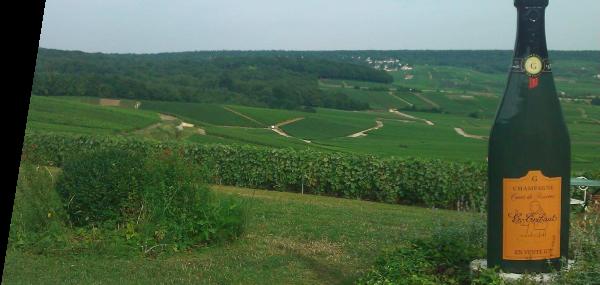 Champagne Tribaut Vineyards